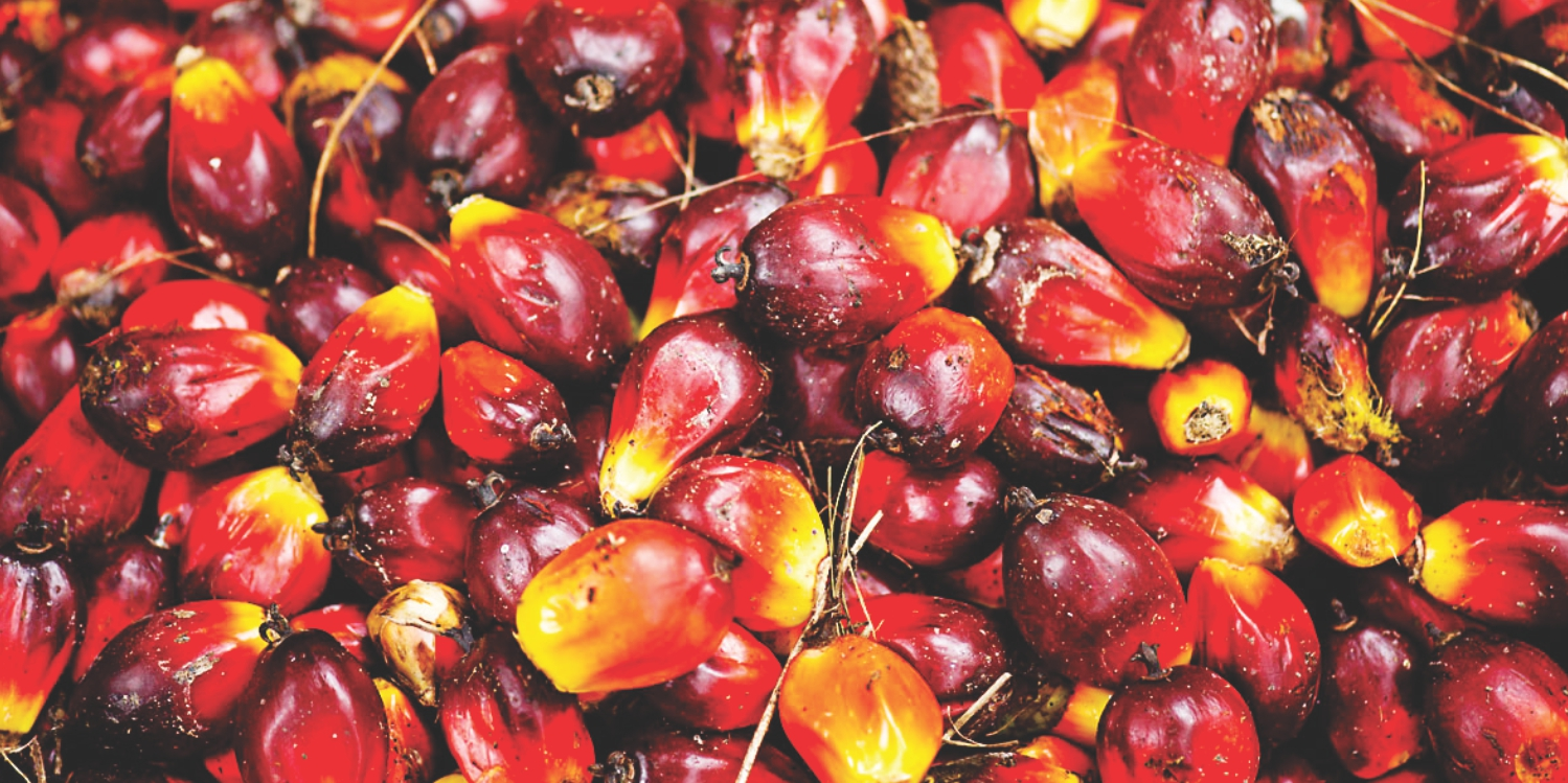 C'River palm oil in high demand in northern Nigeria, West Africa - Dealer