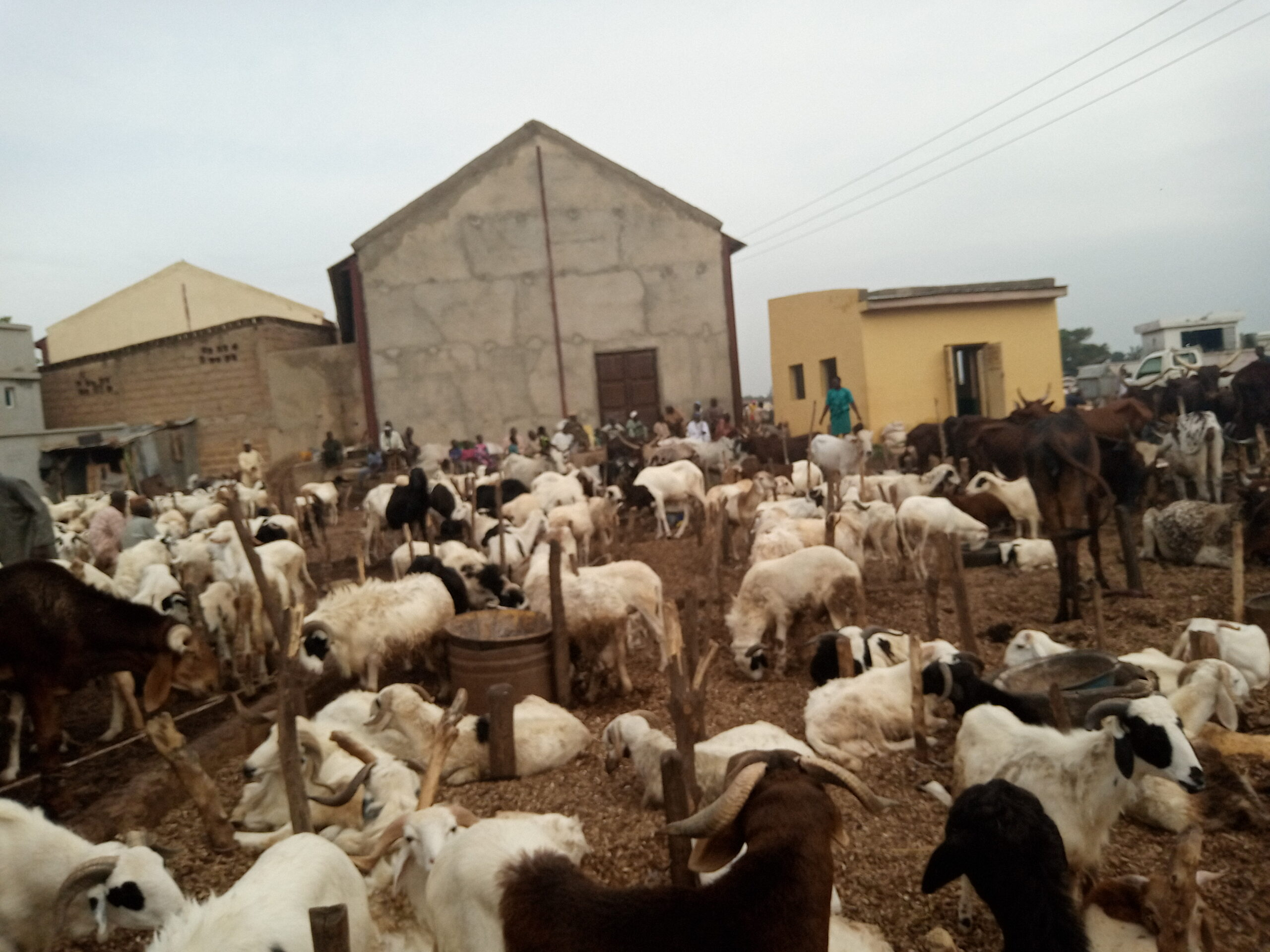IMG 20200727 164436 8 0ddb580971e79843a274683add05ac24 scaled - Sallah: Cost of food items, livestock drop